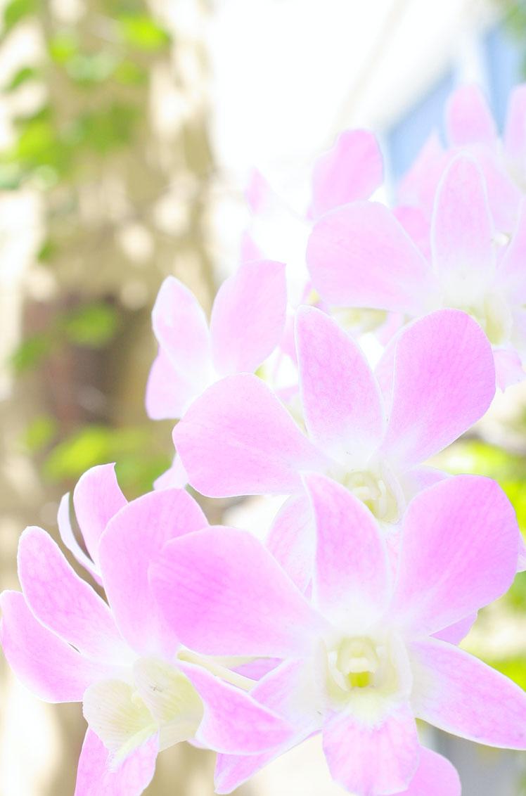Miami-floral6