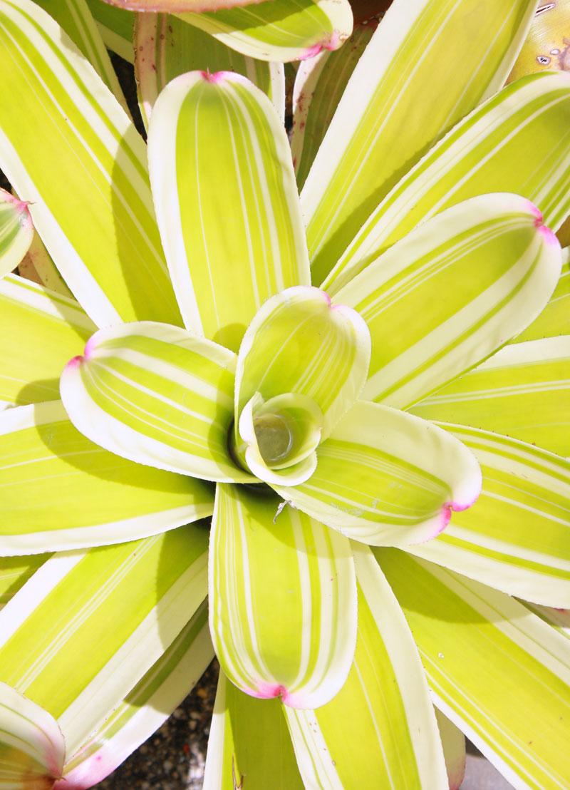 Miami-floral