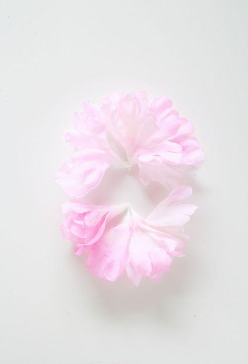 Floral-photo3