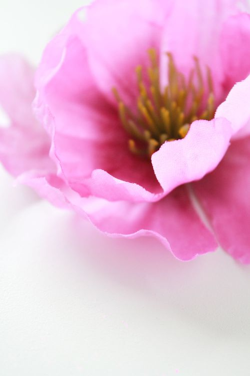 Floral-photo