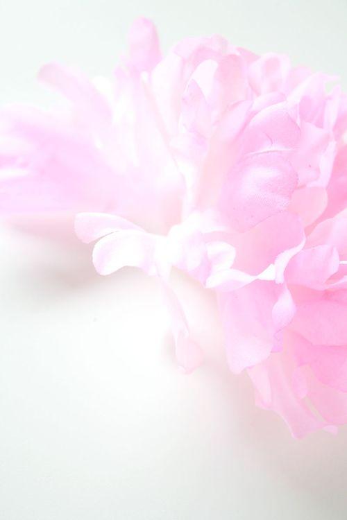 Floral-photo4