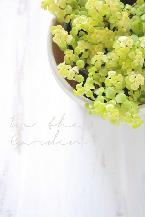 Garden-inspo3