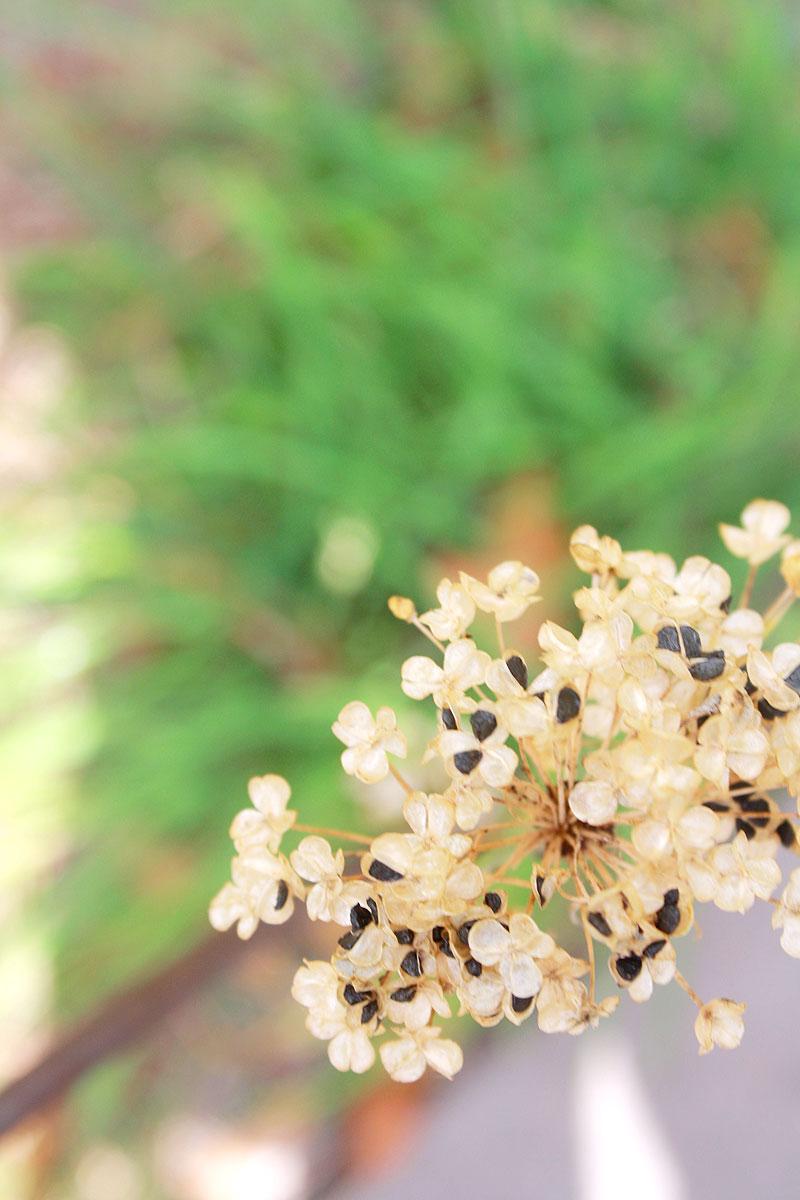 Garden-photo3