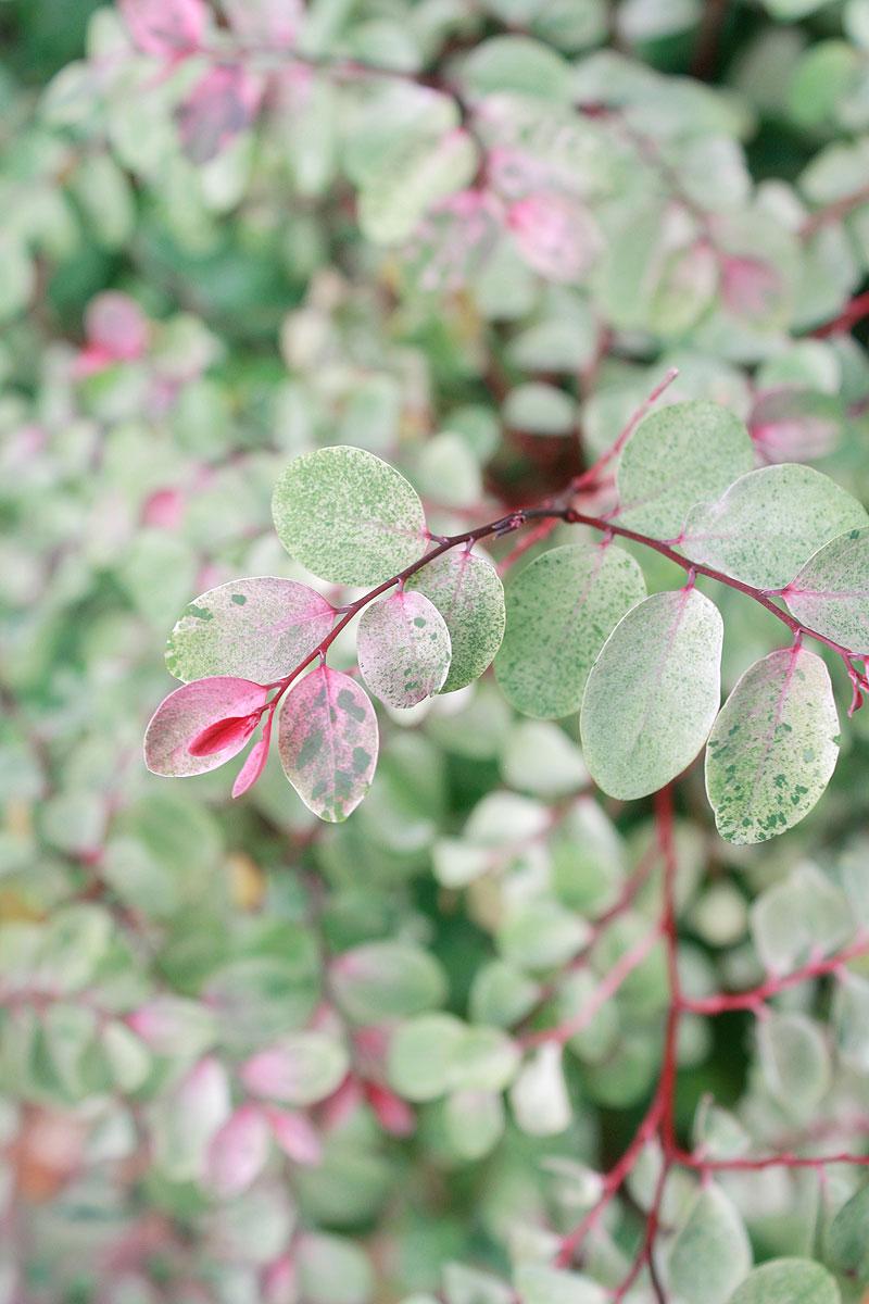 Garden-photo10