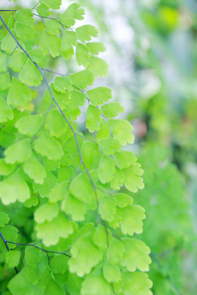 Garden-photo6