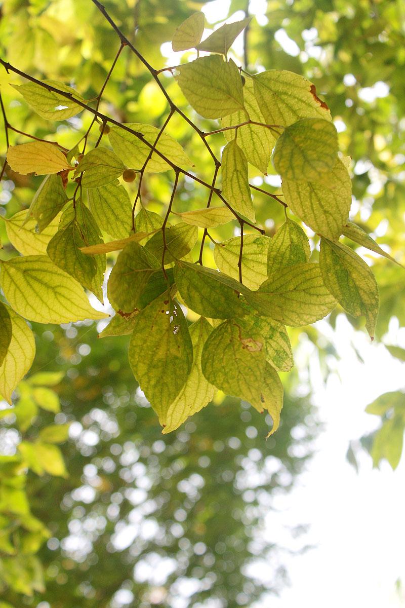 Garden-photo14
