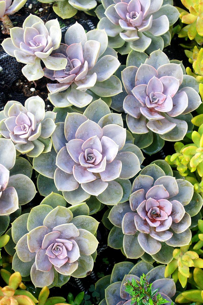 Garden-photo12