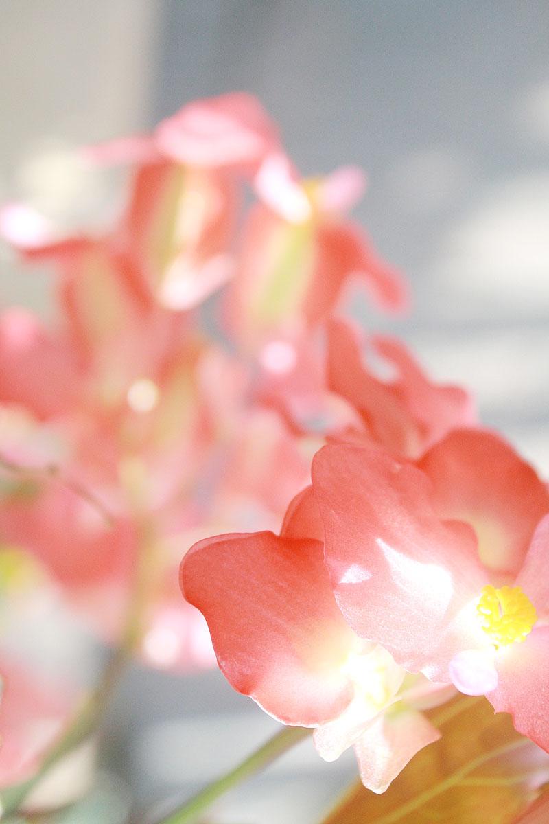 Garden-photo13